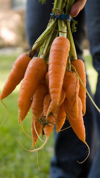 Lekkere verse worteltjes